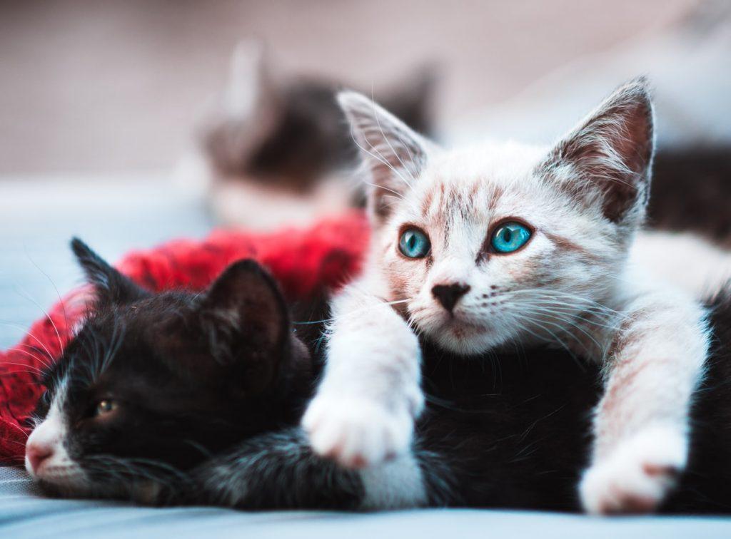Argghh… Kattenharen! Enkele schoonmaaktips om ze makkelijk weg te halen.
